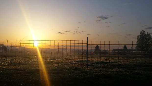 A great sunrise with a little ice under the irrigation lines
