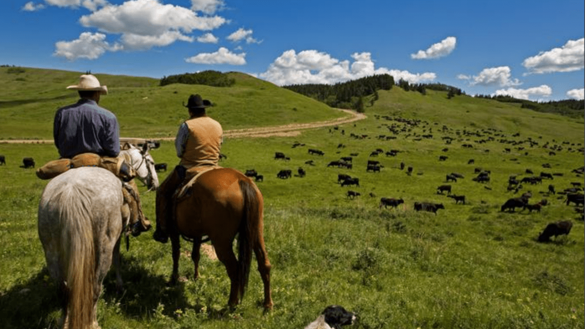 British Columbia Cattlemen with Kevin Boon   Agriculture Proud Podcast 013