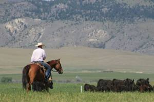 July Open Land Dillon Montana Rancher
