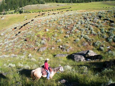 agriculture internships ranching