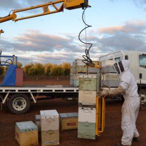 Bienenvölker werden mit dem Easyloader verladen