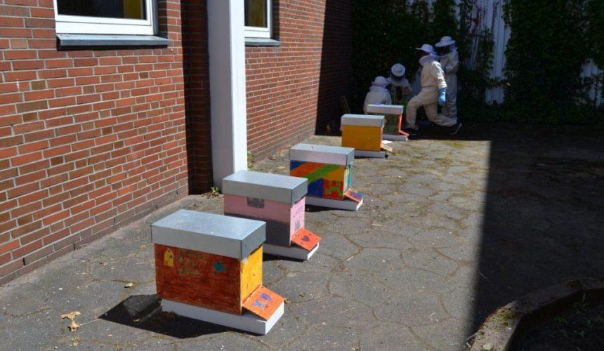 Bunt bemalte Bienenvölker Leibnitzschule-Hitzhusen beim Projekt Sommerbienen