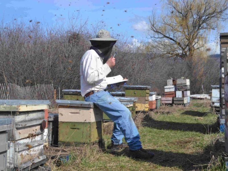 Ein Imker notiert bei seinen Bienen etwas