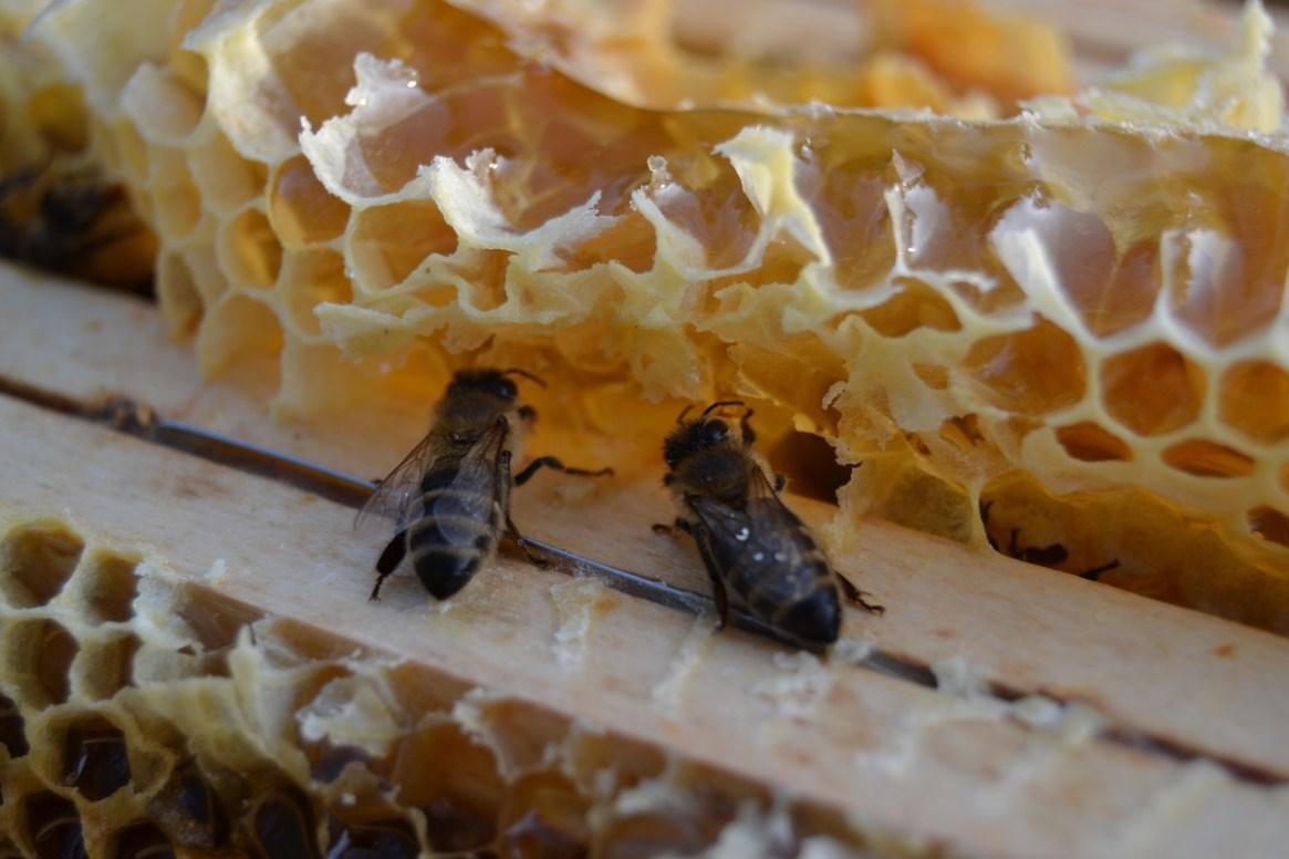 zwei Bienen lecken Honig vom Überbau auf