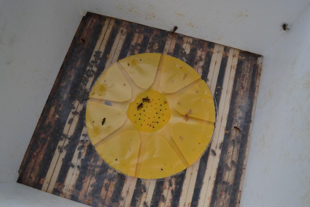 Bienenflucht einer Segeberger Bienen Beute