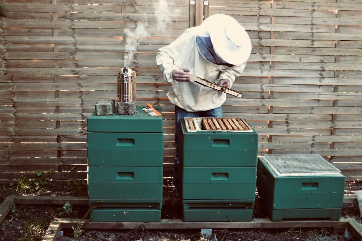 Felix Mrowka arbeitet an seinen Bienen