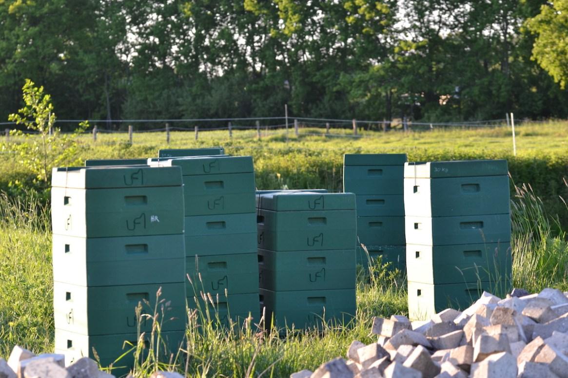 Mehrere Bienenvölker stehen auf einer Wiese