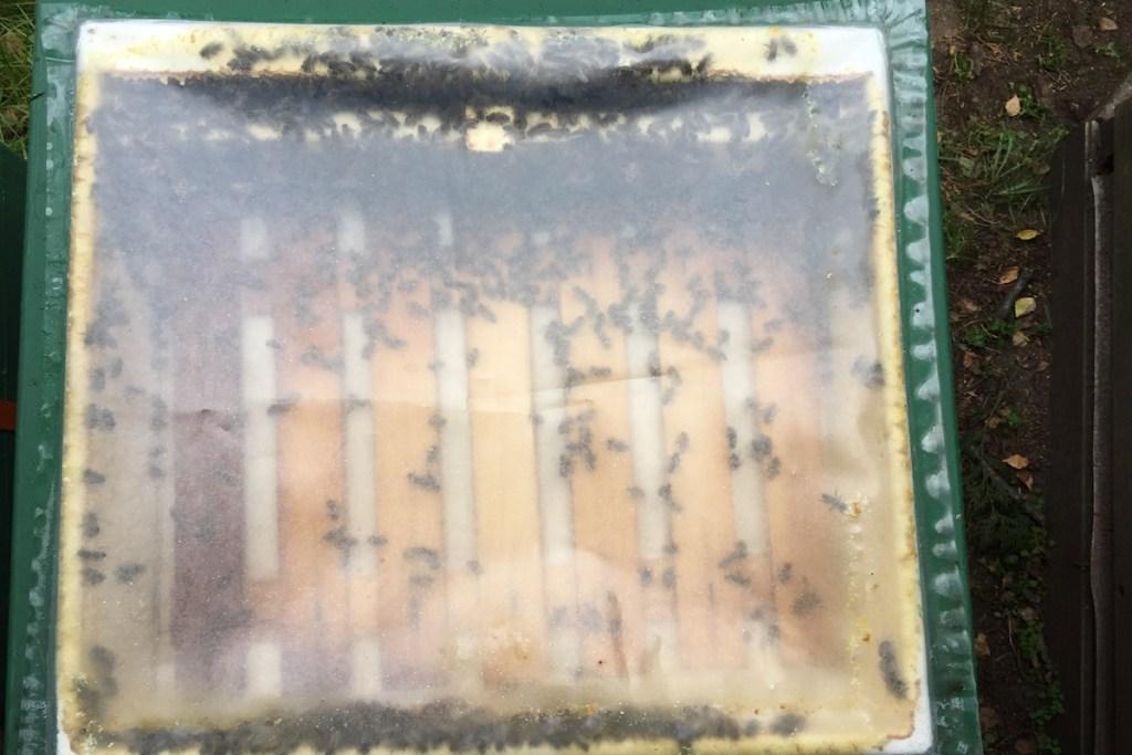 Bienen tummeln sich in einer leeren Futterzarge