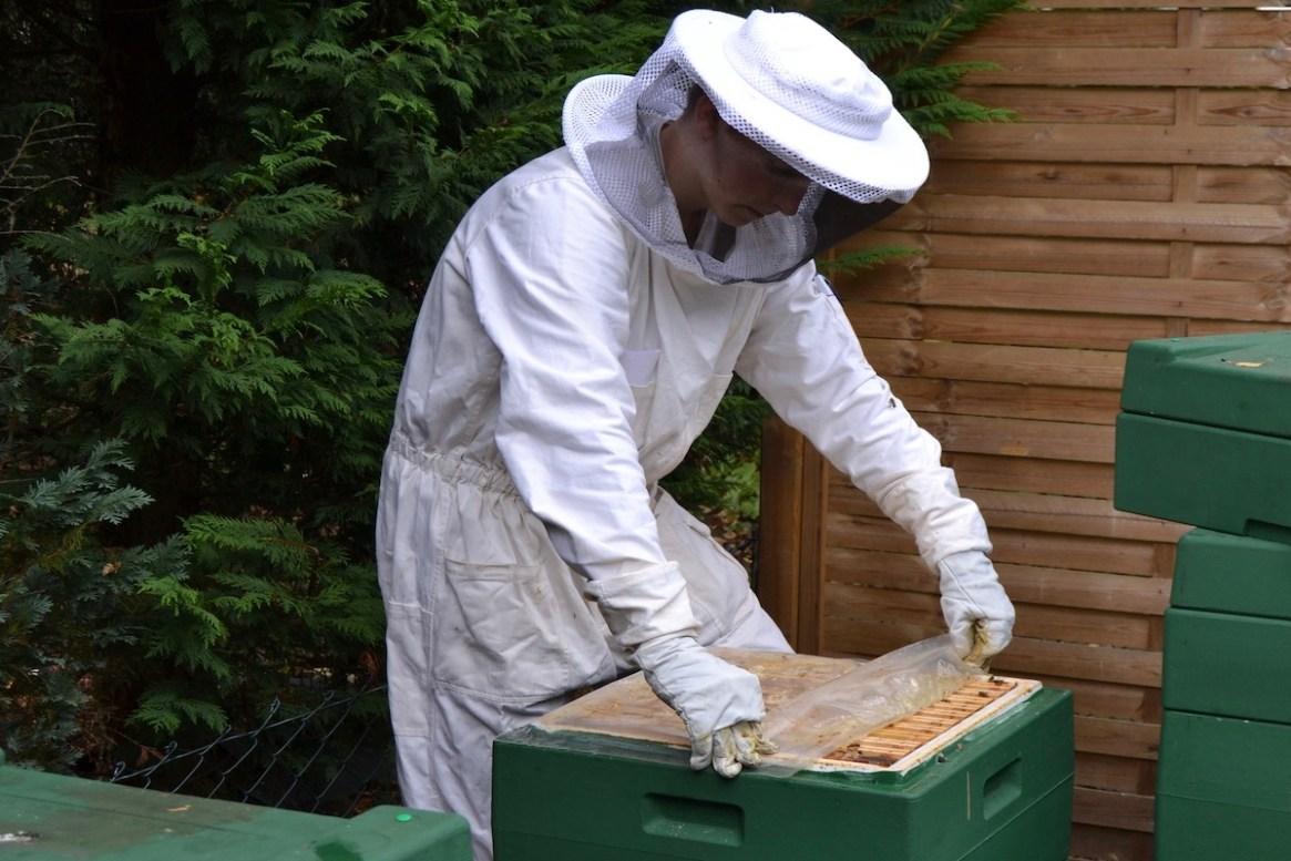 Ein Imker klappt die Folie auf einem Bienenvolk um