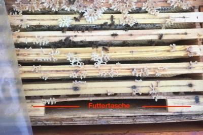 Eine Futterzarge zum Bienen Füttern ist ein Drittel gefüllt