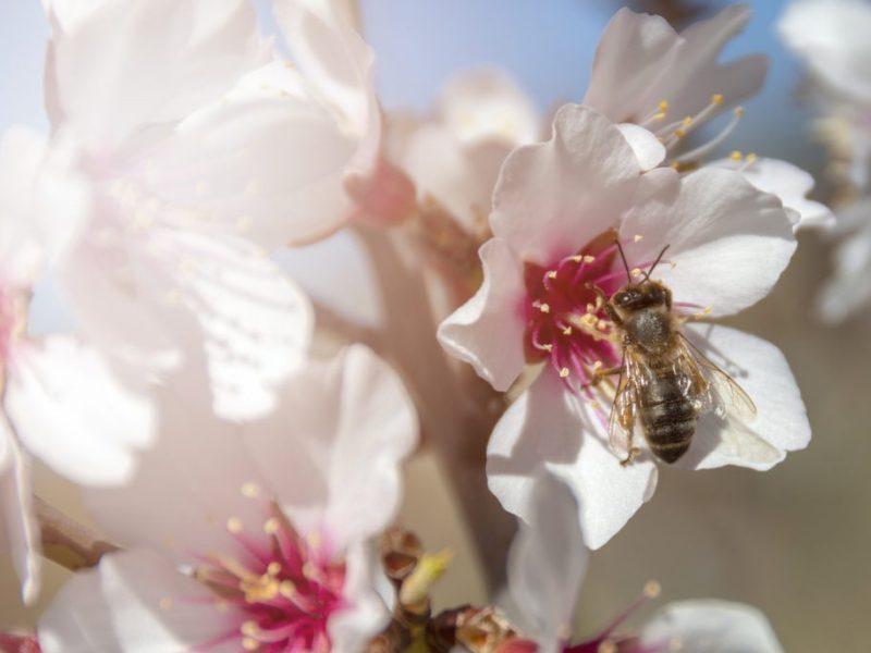 Titelbild BeeHappy Mission - Beste Imkerausbildung Online für Deutschland