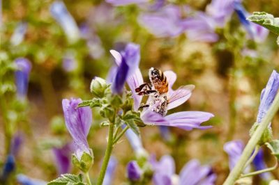Melde dich an - BeeHappy Schnuppertage beim Imker