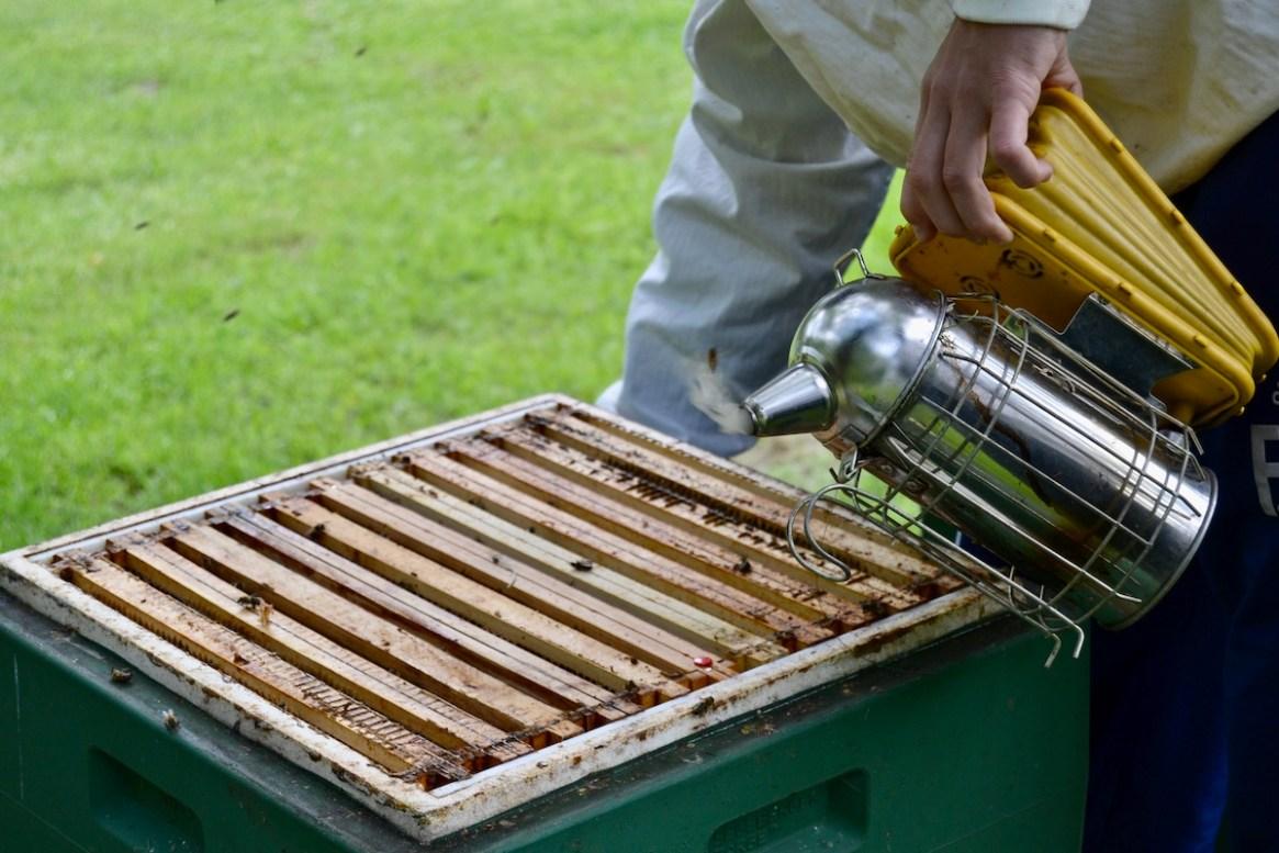 Ein Smoker hilft beim ruhigen Imkern an den Bienen