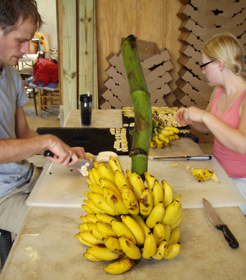 Jade and Mike cutting bananas for the dehydrator.