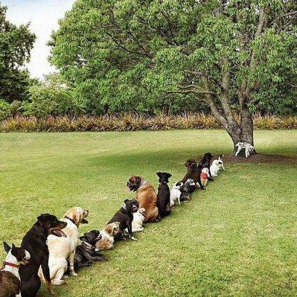 Les conséquences de la déforestation