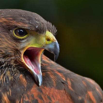 Une vingtaine de superbes photographies d'animaux