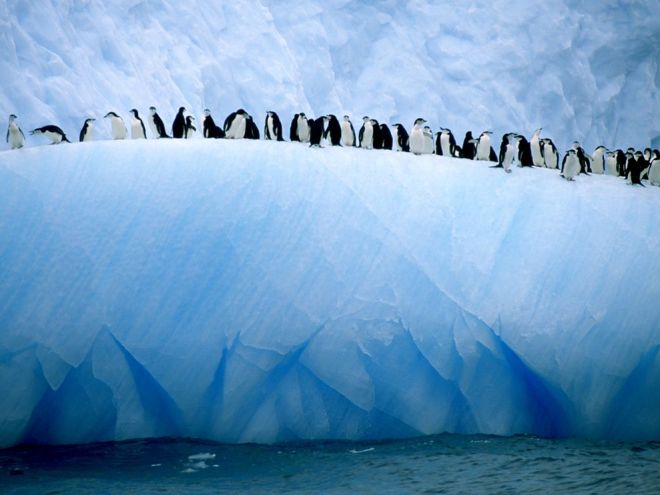 Iceberg Penguins by Ralph Lee Hopkins
