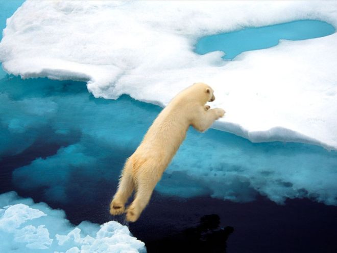Polar Bear in Svalbard by Ralph Lee Hopkins