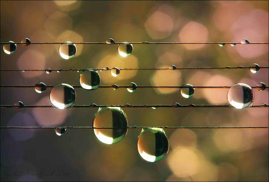 Music of the Rain ©Natalia Jeshoa