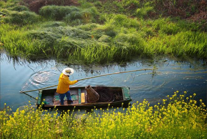 Boatman and Canola