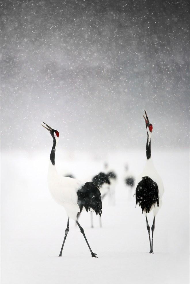 Crane in the snow