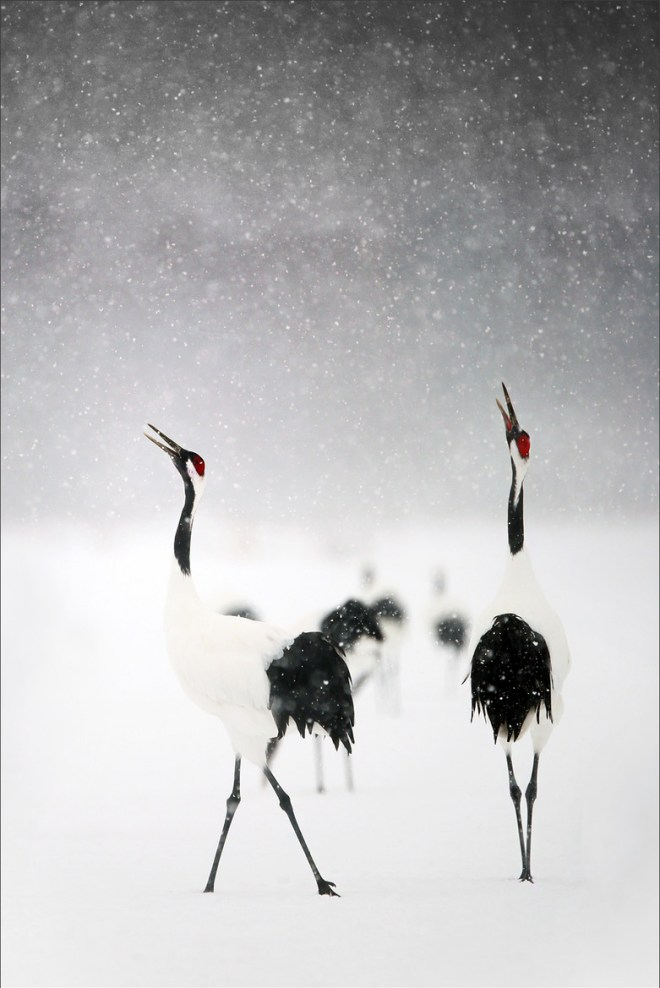 Crane in the snow