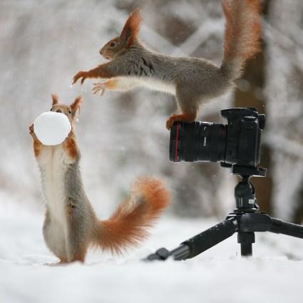 Des écureuils photographes, une succession de photographies vraiment mignonnes