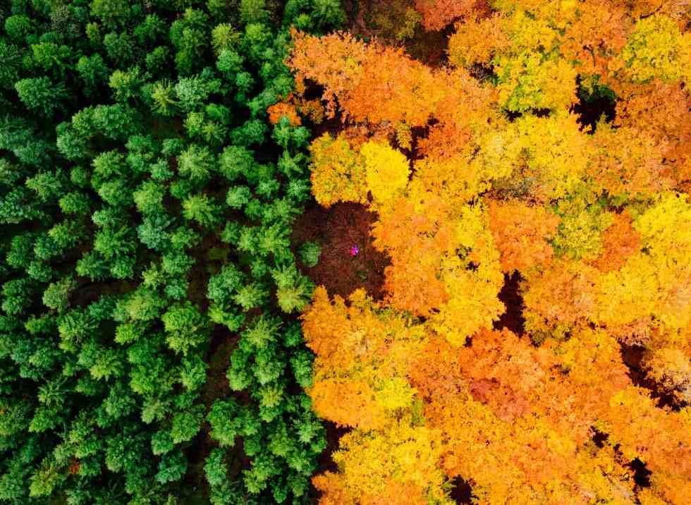 Forêt de la Halland, Suède (c) Anders Andersson