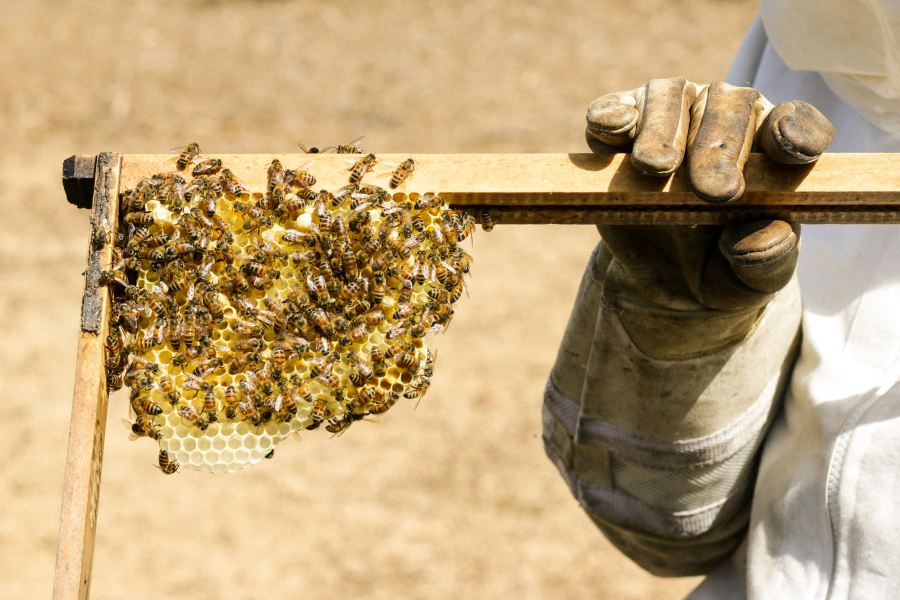 beekeeper extracting honey beehype raw pure natural honey