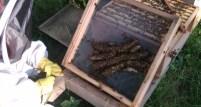 cropped-bees-under-floor.jpg