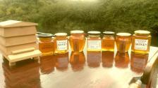 Honey on boat hatch