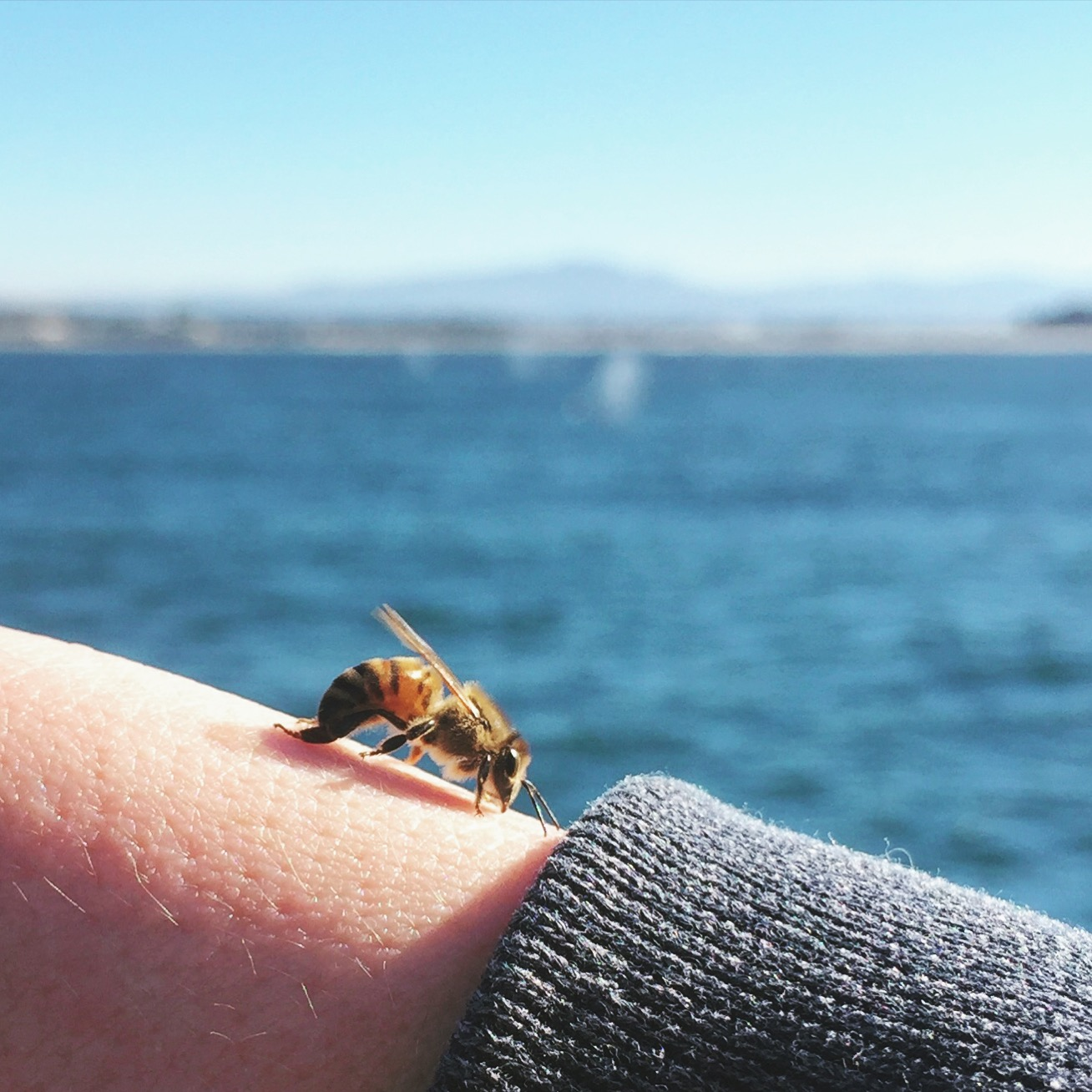 Bee on a Whale Watching Trip