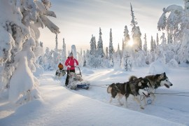 Met hondenslede door Fins Lapland