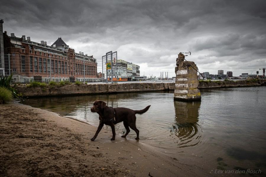 stadslandschap amsterdam
