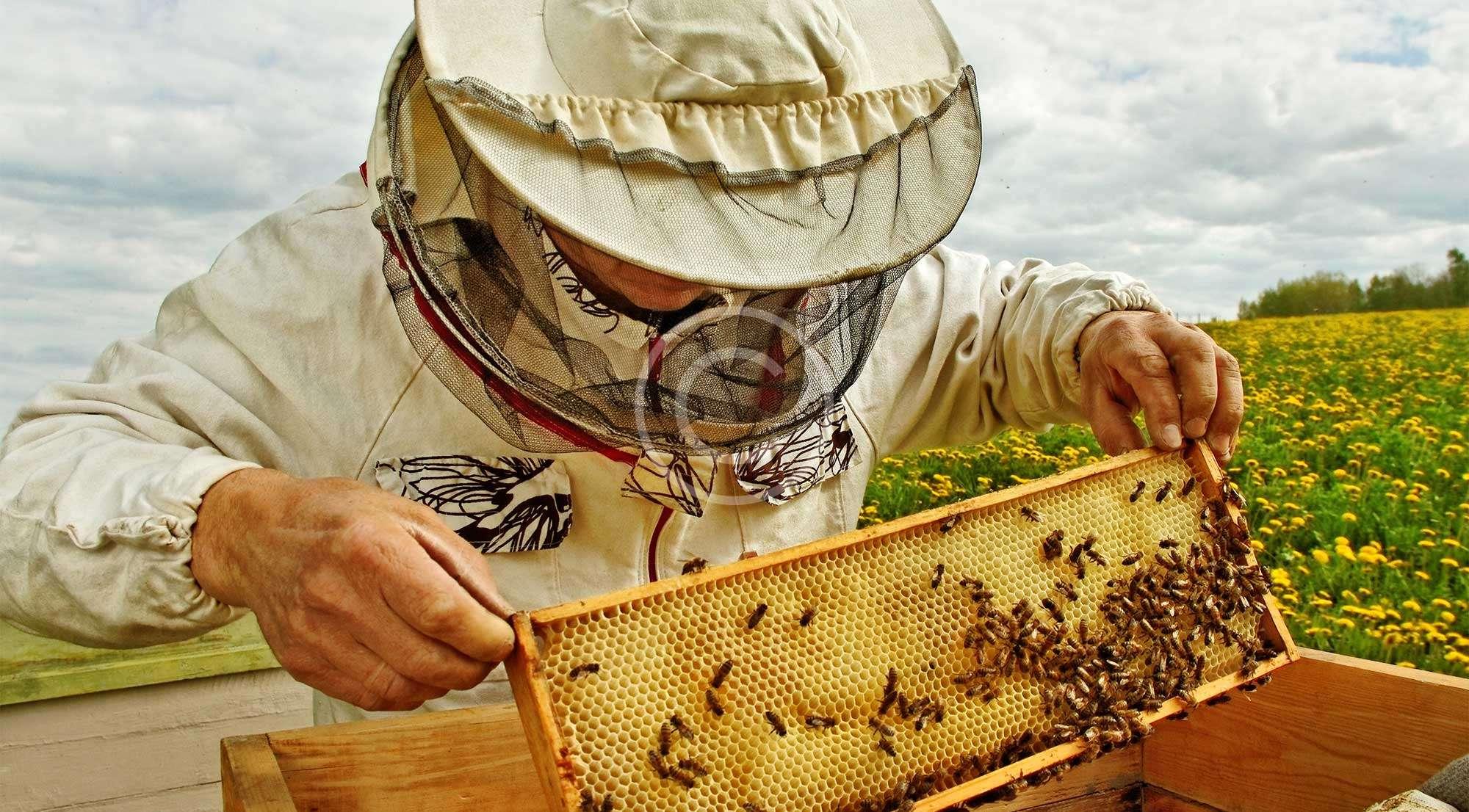 Κερί μέλισσας