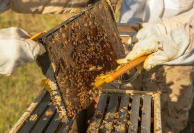 beeloved-trading-honey-harvest-hive-frame