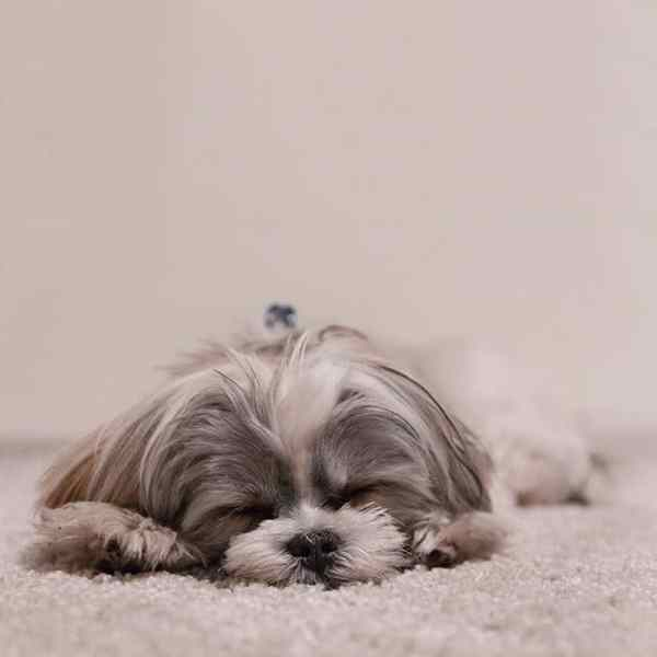 dog hair cleaning ideas