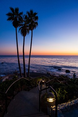 Palm Tree, Path, and Pacific Ocean at Laguna Beach