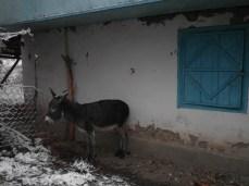 wpid-mntsdcard_ExternalSDDCIMBlog05-Arslanbob-Donkey.JPG.jpg