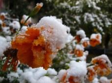 wpid-mntsdcard_ExternalSDDCIMBlog07-Arslanbob-Snow-flakes.JPG.jpg