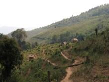 37-Luang Namtha-trekking in the jungle