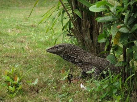 Tioman island creatures