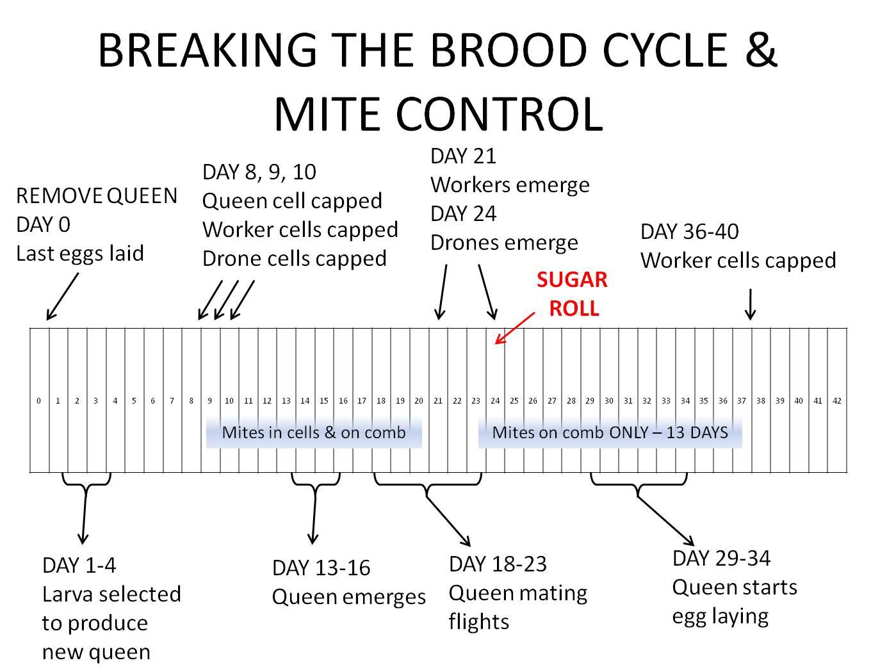 Breaking The Cycle Worksheet