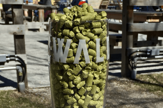 Waldmann IPL • Photo via Waldmann Brewery