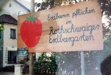 Erdbeeren pflücken im Rothschwaiger Erbdeergarten