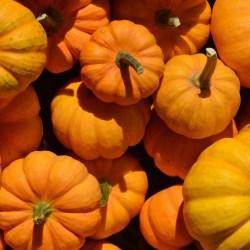 pumpkin-1004377_1280