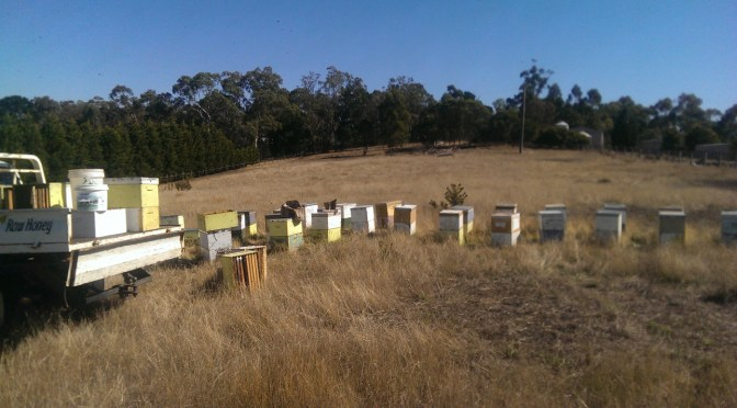 Working some of our migrating hives....we produce raw local honey and a popular hay fever and sinus remedy as well as remove and rescue bees from buildings, homes and trees across Melbourne