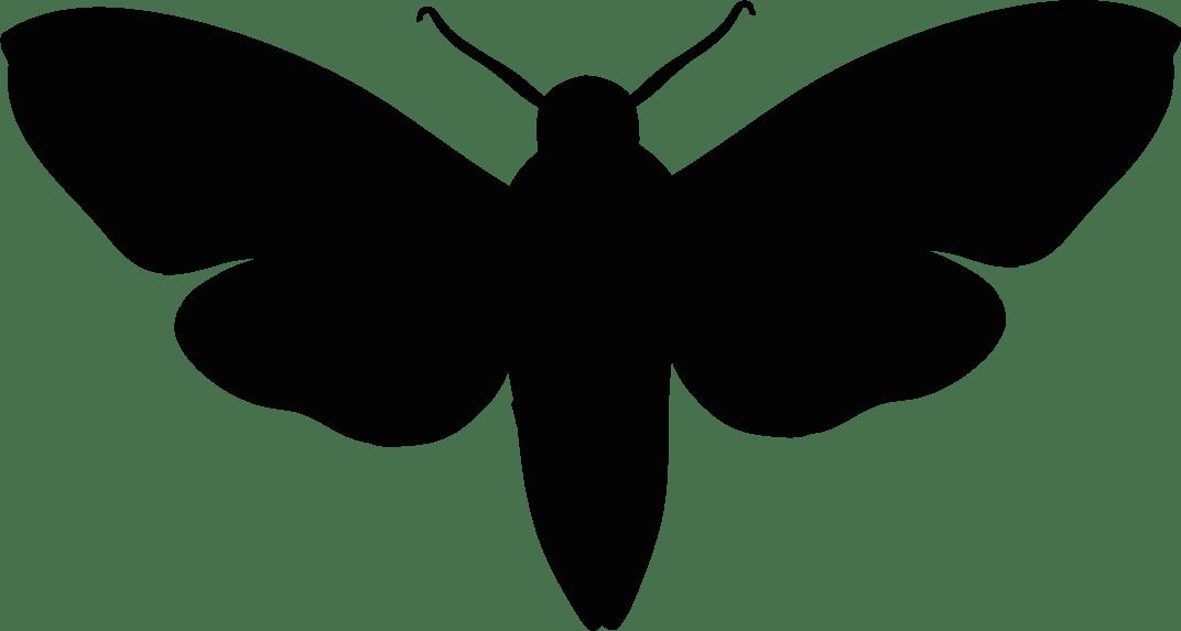 Moth all black