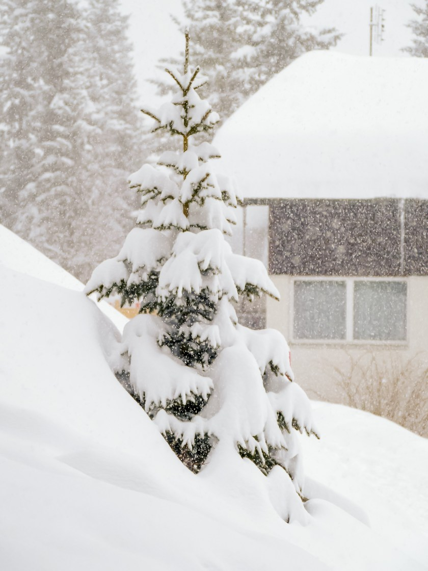 nach dem grossen Schneefall Arosa-1090994
