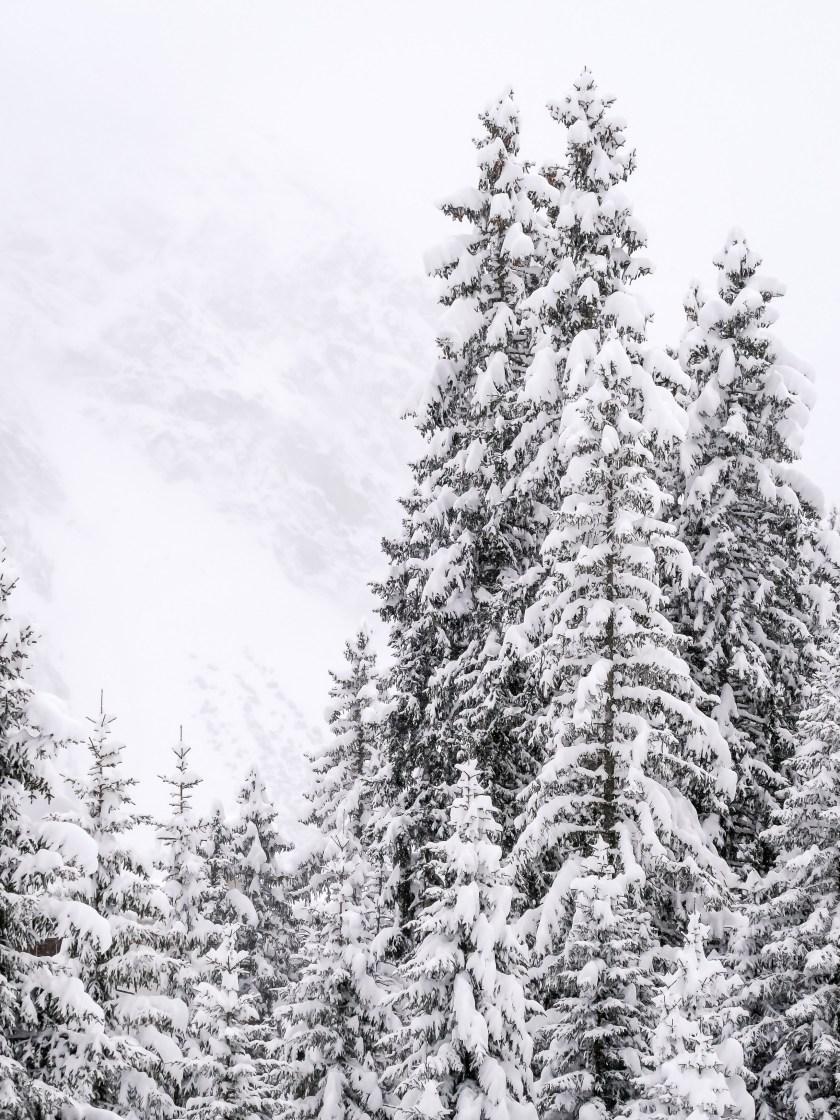 nach dem grossen Schneefall Arosa-1100022